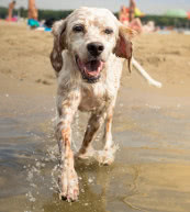 Vacation with your dog in a holiday home or a holiday apartment in Hungary.
