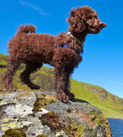Vacation with your dog in a holiday home or a holiday apartment in Ireland.