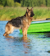 Dog-friendly vacation in holiday accommodation in Poland.
