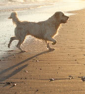 Trips for dog lovers. Holiday apartments in Portugal.