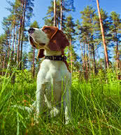 Vacanze dog friendly in una casa vacanza in Finlandia.